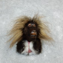 Reproduction Gelada Taxidermy Mount For Sale #18312 @ The Taxidermy Store