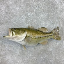 Reproduction Largemouth Bass Fish Mount For Sale #23404 @ The Taxidermy Store