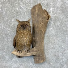 Reproduction Long-eared Owl Taxidermy Mount For Sale