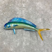 Reproduction Mahi Mahi Taxidermy Fish Mount #23161 For Sale @ The Taxidermy Store