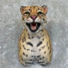 Reproduction Ocelot Taxidermy Shoulder Mount #22729 For Sale @ The Taxidermy Store