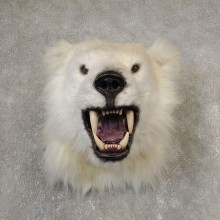 Reproduction Polar Bear Shoulder Mount #21059 For Sale @ The Taxidermy Store