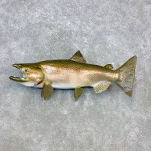 Reproduction Rainbow Trout Fish Mount For Sale #23277 @ The Taxidermy Store