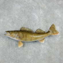 Reproduction Walleye Mount For Sale #17945 @ The Taxidermy Store