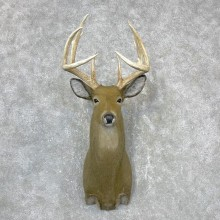Reproduction Whitetail Deer Shoulder Mount #24410 For Sale - The Taxidermy Store