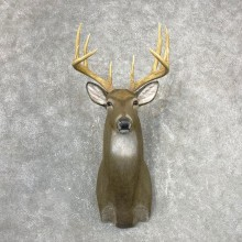 Reproduction Whitetail Deer Shoulder Mount #24411 For Sale - The Taxidermy Store