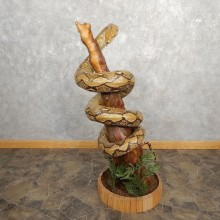 Reticulated Python Snake Taxidermy Mount For Sale