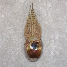 Ringneck Pheasant Bird Mount For Sale #22217 @ The Taxidermy Store