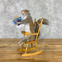 Rocking Chair Squirrel Novelty Mount For Sale #23472 @ The Taxidermy Store