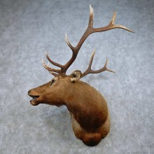 Rocky Mountain Elk Mount For Sale #15019 @ The Taxidermy Store