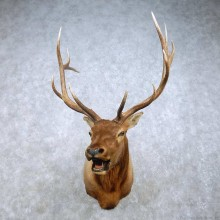 Rocky Mountain Elk Mount For Sale #15020 @ The Taxidermy Store