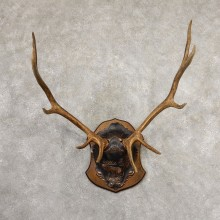 Rocky Mountain Elk Plaque Mount For Sale #19317 @ The Taxidermy Store