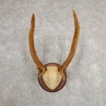 Rocky Mountain Elk Plaque Mount For Sale #20999 @ The Taxidermy Store