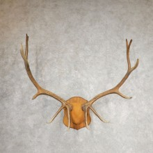 Rocky Mountain Elk Plaque Mount For Sale #21064 @ The Taxidermy Store