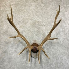 Rocky Mountain Elk Plaque Mount For Sale #24503 @ The Taxidermy Store