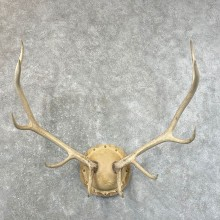 Rocky Mountain Elk Plaque Mount For Sale #24637 @ The Taxidermy Store
