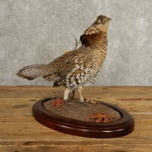 Ruffed Grouse Bird Mount For Sale #20500 @ The Taxidermy Store