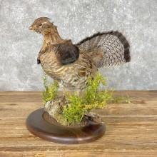 Ruffed Grouse Taxidermy Bird Mount For Sale
