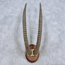 Sable Horn Plaque Taxidermy Mount For Sale #13996 @ The Taxidermy Store