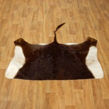 Sable Hide Taxidermy Tanned Skin For Sale #17467 @ The Taxidermy Store