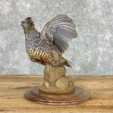Scaled Quail Taxidermy Bird Mount For Sale #23038 @ The Taxidermy Store