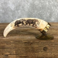 Scrimshawed Warthog Tooth For Sale #19948 @ The Taxidermy Store
