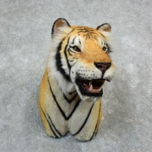 Reproduction Siberian Tiger Shoulder Mount For Sale #18294 @ The Taxidermy Store