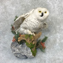 Reproduction Snowy Owl Taxidermy Mount For Sale