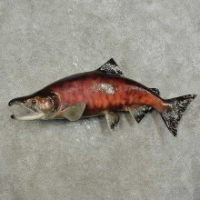 Sockeye Salmon Fish Mount For Sale #15921 @ The Taxidermy Store