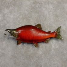 Sockeye Salmon Fish Mount For Sale #20345 @ The Taxidermy Store