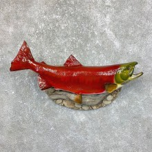 """24.5"""" Spawning Phase Sockeye Salmon Taxidermy Mount For Sale"""