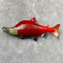 Sockeye Salmon Taxidermy Fish Mount For Sale #24368 @ The Taxidermy Store