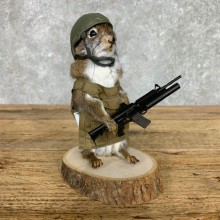 Soldier Squirrel Novelty Mount For Sale #23467 @ The Taxidermy Store