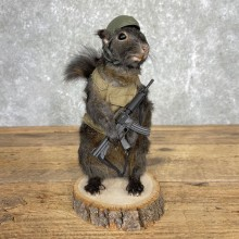 Soldier Squirrel Novelty Taxidermy Mount For Sale
