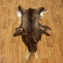 South Pacific Chamois Tanned Skin Taxidermy Rug For Sale #17461 @ The Taxidermy Store