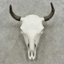Longhorn Steer Skull European Mount For Sale #16919 @ The Taxidermy Store