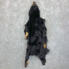 Tanned Black Bear Wall Hanging Pelt For Sale #23707 @ The Taxidermy Store