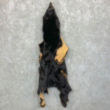 Tanned Black Bear Wall Hanging Pelt For Sale #23708 @ The Taxidermy Store