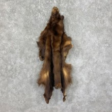 Tanned Chocolate Black Bear Wall Hanging Pelt For Sale #25312 - The Taxidermy Store