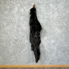 Tanned Black Bear Wall Hanging Pelt For Sale #25341 - The Taxidermy Store