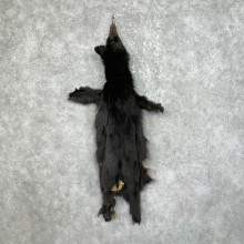 Tanned Black Bear Wall Hanging Pelt For Sale #25342 - The Taxidermy Store