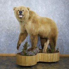 Toklat Grizzly Bear Mount For Sale #22302 @ The Taxidermy Store