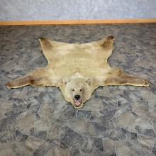 Toklat Grizzly Bear Taxidermy Rug Mount For Sale #23334 @ The Taxidermy Store
