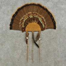 Eastern Wild Turkey Fan For Sale #16962 @ The Taxidermy Store