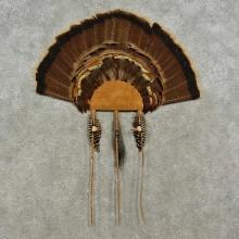 Eastern Wild Turkey Fan For Sale #16963 @ The Taxidermy Store