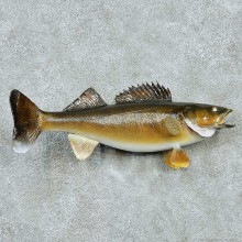 Walleye Life-Size Mount #13512 For Sale @ The Taxidermy Store