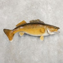 Walleye Taxidermy Fish Mount #20887 For Sale @ The Taxidermy Store