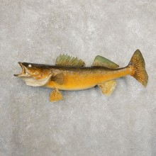 Walleye Taxidermy Fish Mount #20889 For Sale @ The Taxidermy Store
