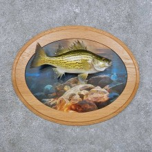 White Bass Fish Mount For Sale #14103 @ The Taxidermy Store