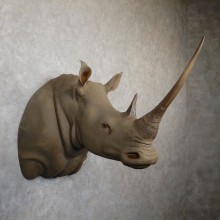 White Rhinoceros Replica Taxidermy Shoulder Mount For Sale